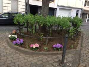 Urban Gardening Tempelplätzchen (1)